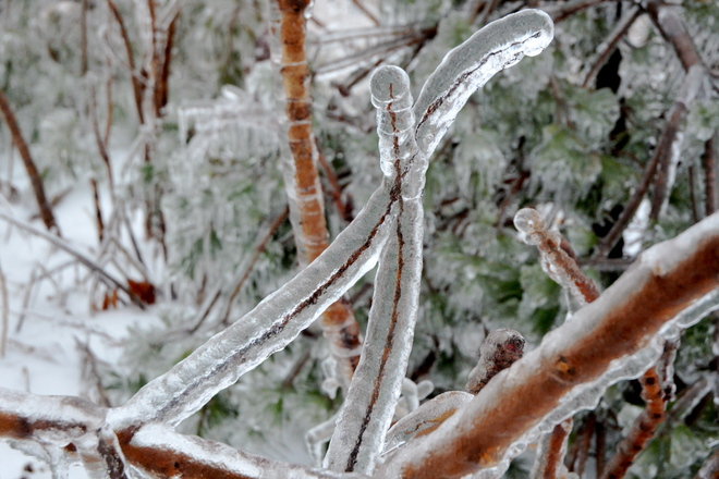 Two Icy Twigs Waterdown, Ontario Canada