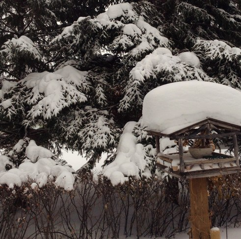 Snow laden bird house Arborg, Manitoba Canada