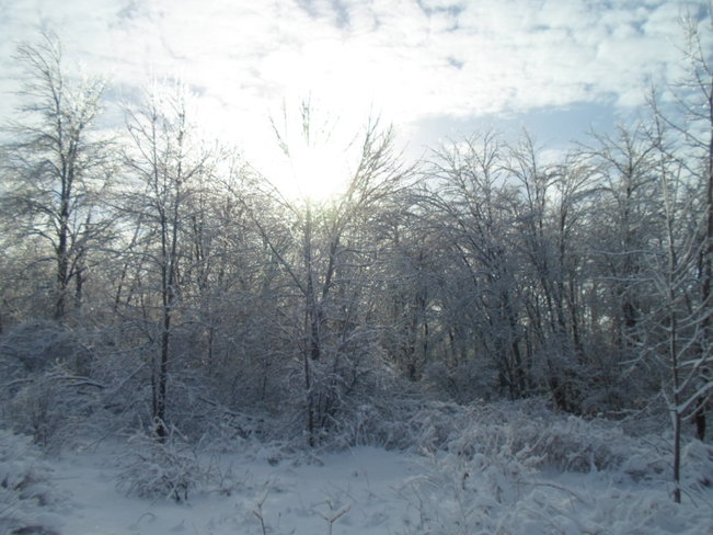 Snowy forest with sun