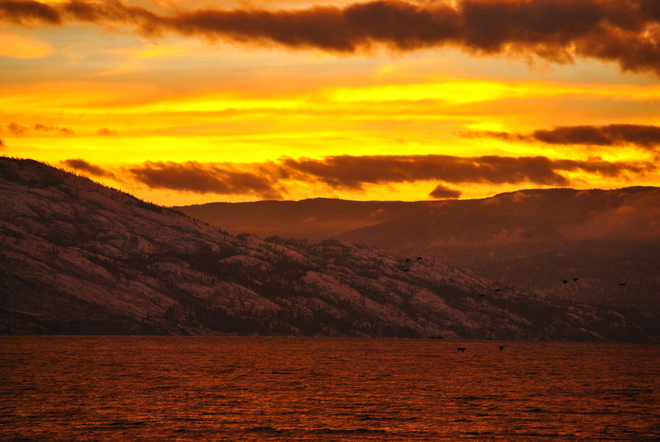 Okanagan Sunset and Geese Heading Home South Kelowna, British Columbia Canada