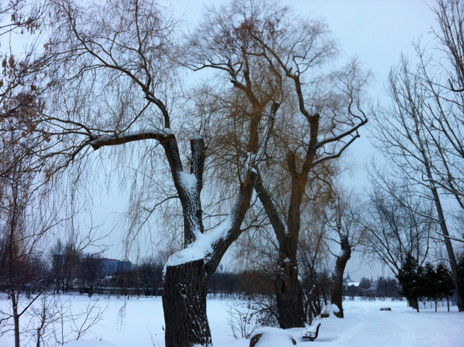 Winter at Rideau River