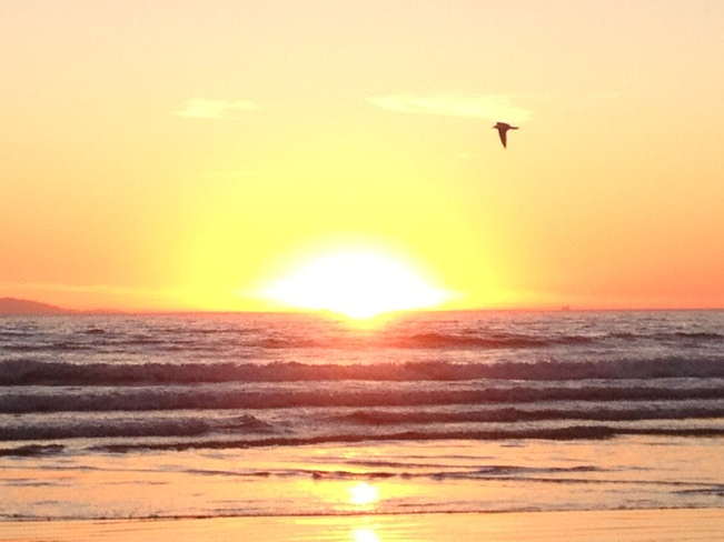 Sunset Sea Gull Newport Beach, California United States