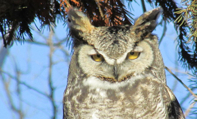 """Look into my eyes"" Swift Current, Saskatchewan Canada"