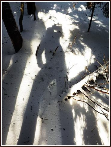 winter shadow in the forest Canning, Nova Scotia Canada