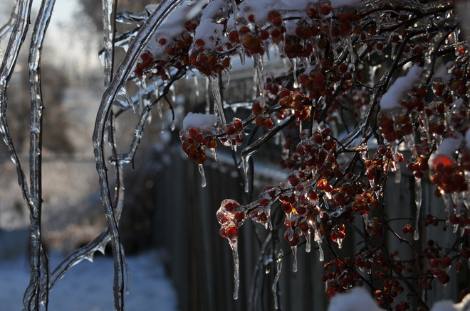 Ice berries Mississauga, Ontario Canada