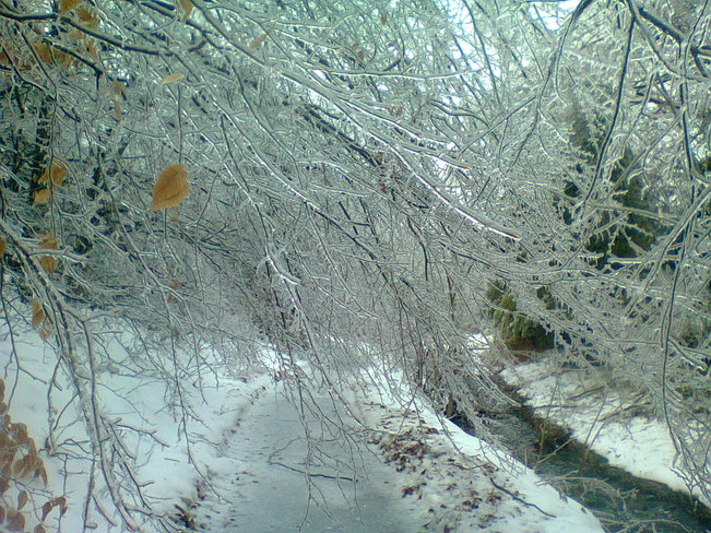 Ice storm Bowmanville, Ontario Canada