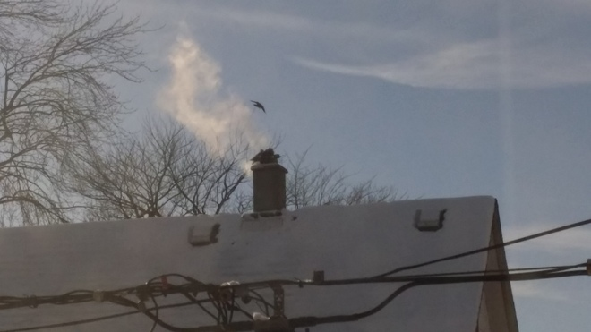 Birds keeping warm at the top of a chimney Windsor, Ontario Canada