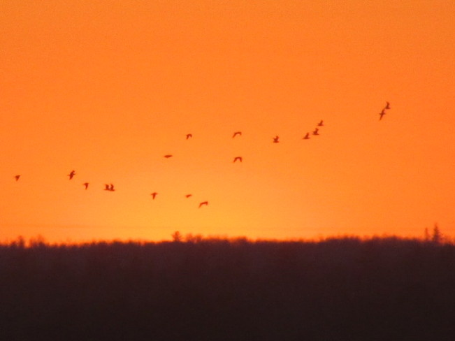 Many Birds Take Flight Thru The Skies