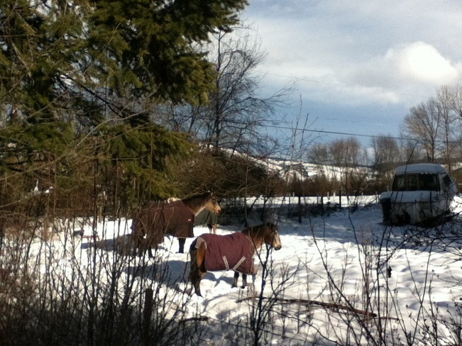 horses in winter jackets South Vernon, British Columbia Canada