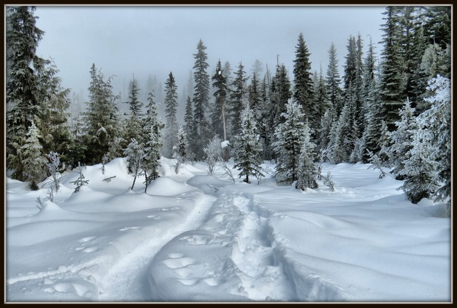 Snowshoeing at Larch Hills Salmon Arm, British Columbia Canada