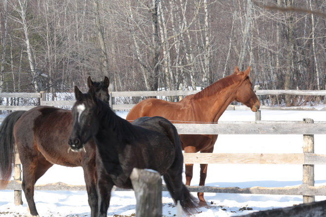 Even the horses are happy! Hudson, Quebec Canada