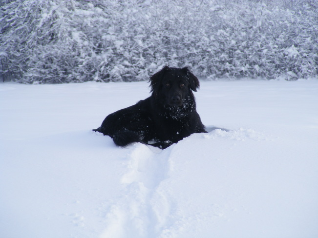 Jack enjoying snow!! Antigonish, Nova Scotia Canada