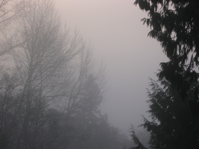 fog Surrey, British Columbia Canada