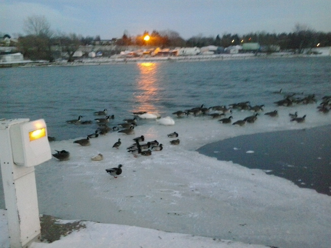 TODAY @ DUSK ..FREEZING COLD Port Dalhousie, Ontario Canada