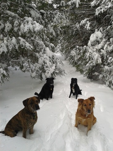 Winter Wonderland Dogs Halifax, Nova Scotia Canada