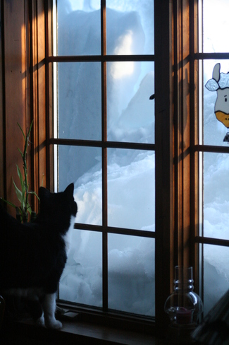 Kitty checking all the snow Severn Bridge, Ontario Canada