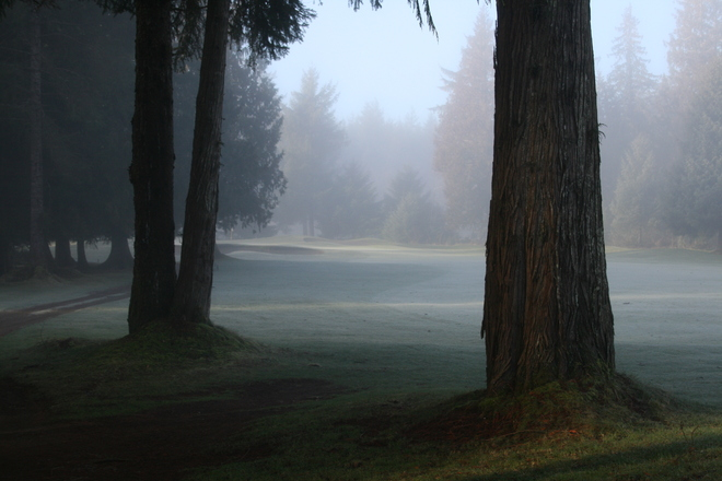 Foggy Morning at SCGC Campbell River, British Columbia Canada