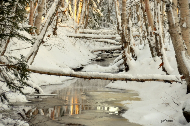 Winter Stream Gander, Newfoundland and Labrador Canada