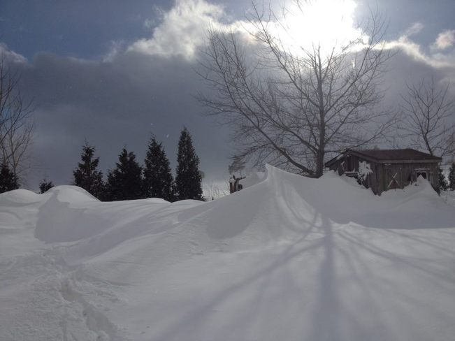 Drifts Kingsville, Ontario Canada