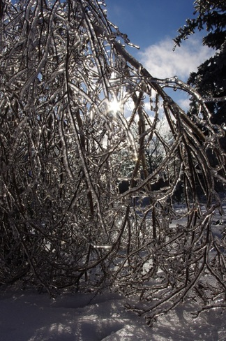 Ice Tree with sun Vaughan, Ontario Canada