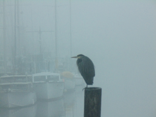 Foggy Days Campbell River, British Columbia Canada