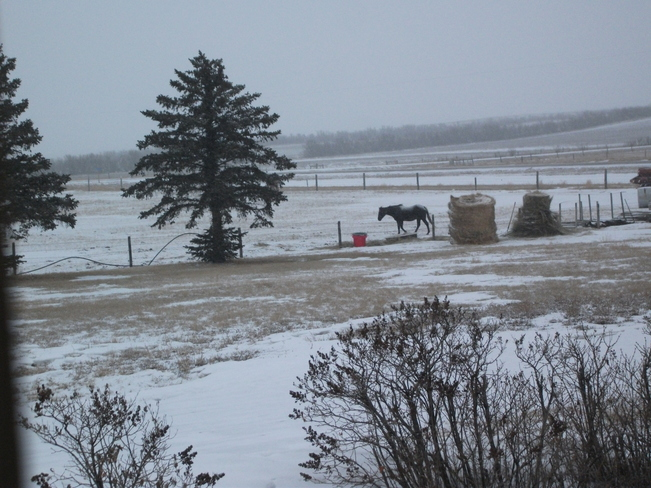 more snow coming Redcliff, Alberta Canada