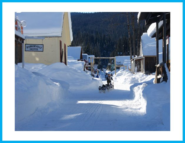 dogsled Wells, British Columbia Canada