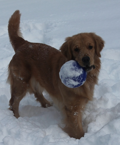 I love the snow!!! Gravenhurst, Ontario Canada