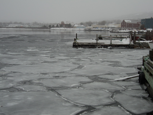 Slob Ice forming in Carbonear Harbor