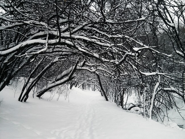 Winter's Trail Hamilton, Ontario Canada