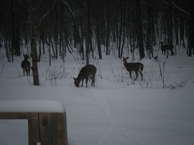 my back yard Peterborough, Ontario Canada
