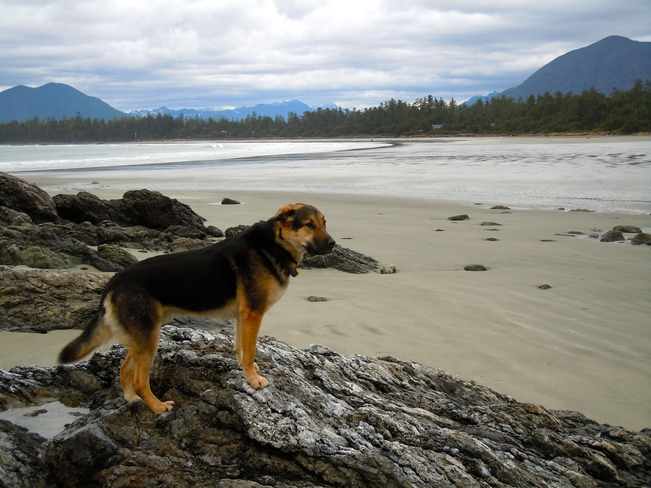 My beach, well in my dreams! Tofino, British Columbia Canada