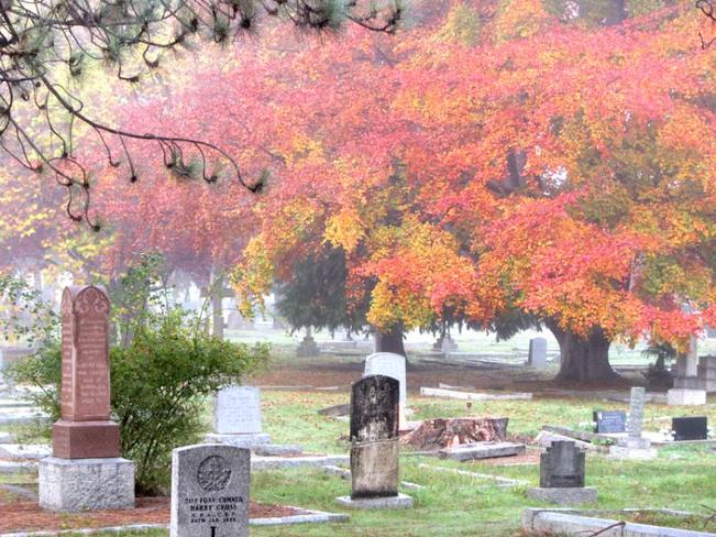 Foggy Fall Day in the Cemetary Victoria, British Columbia Canada