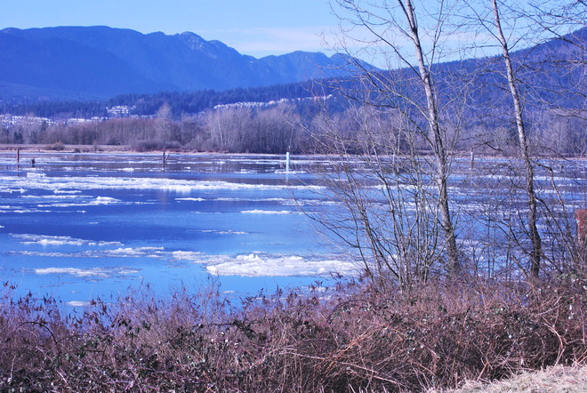ice on the Fraser Pitt Meadows, British Columbia Canada