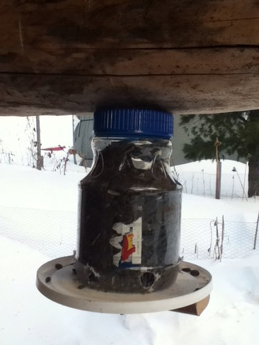 homemade bird feeder Chapleau, Ontario Canada