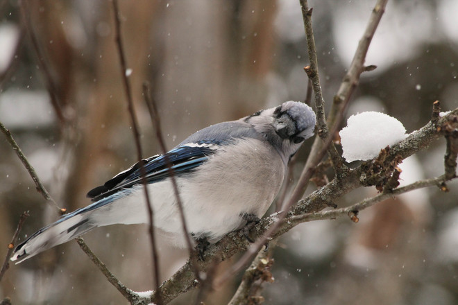Blue Jay Yoga stretch! Kingston, Ontario Canada