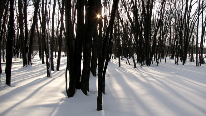 Sun streaming thru the trees Ottawa, Ontario Canada