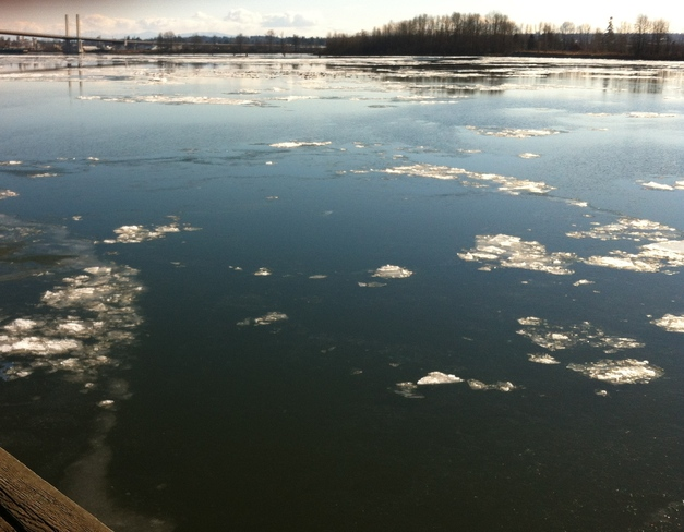 Ice on the Fraser River Pitt Meadows, British Columbia Canada