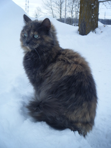 Cat in the snow ! Hanover, Ontario Canada