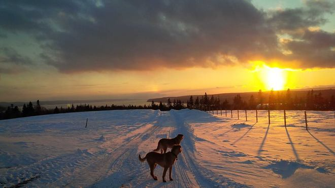 Even the dogs enjoy the sunsets North Sydney, Nova Scotia Canada
