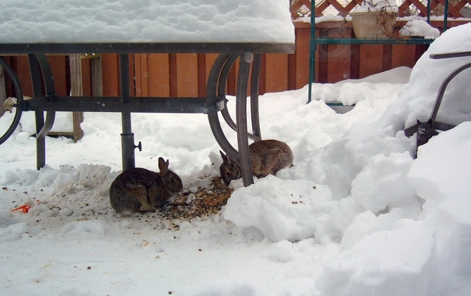 Two Rabbits and a Squirrel Kingston, Ontario Canada