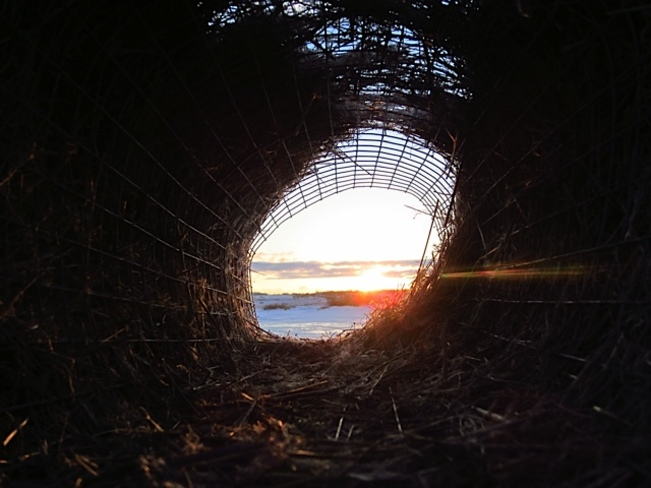 sunset through a duck nest Kerrobert, Saskatchewan Canada