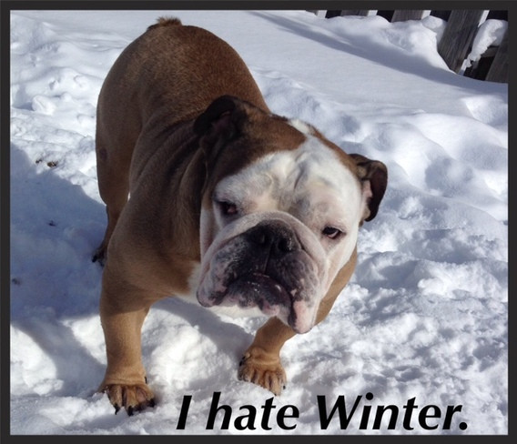 Willy hates winter Owen Sound, Ontario Canada