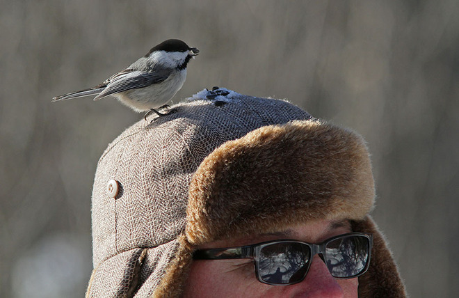 Did anyone see where that Chickadee went? Ottawa, Ontario Canada