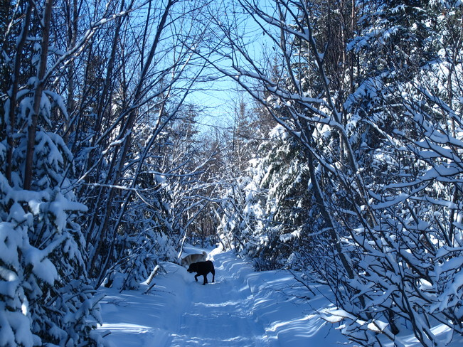 Beautiful day for a stroll in the woods... Deer Lake, Newfoundland and Labrador Canada