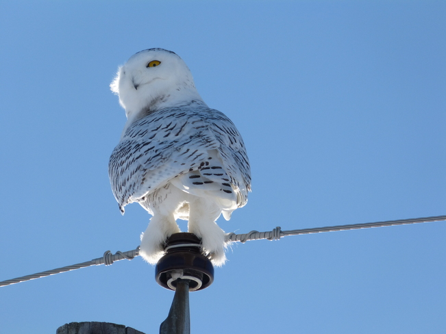 You looking at my snowy white legs? Orleans, Ontario Canada