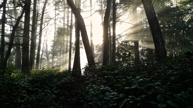 Sunrise in the Rainforest Nanaimo, British Columbia Canada