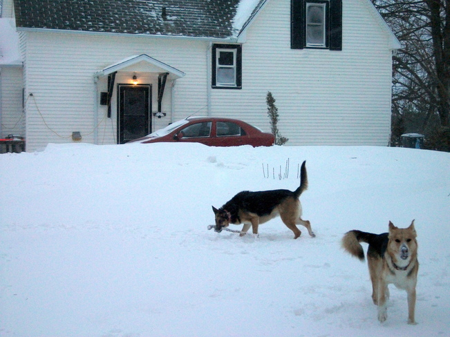 MORE SNOW! Summerside, Prince Edward Island Canada