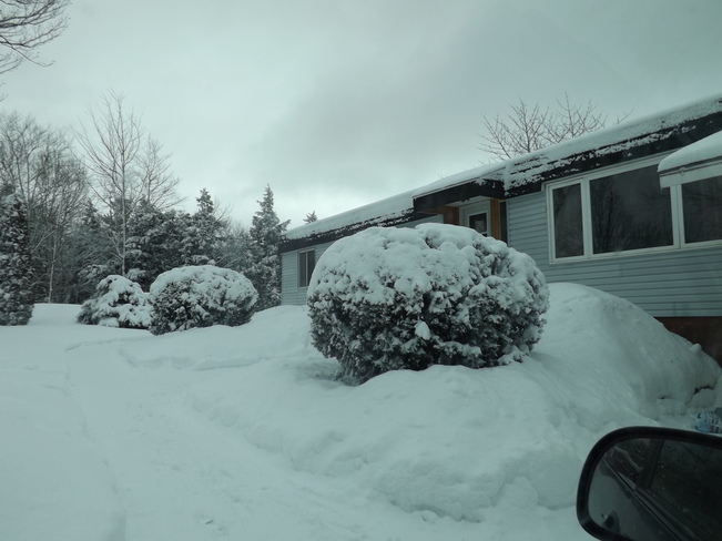 my front yard at noon New Minas, Nova Scotia Canada