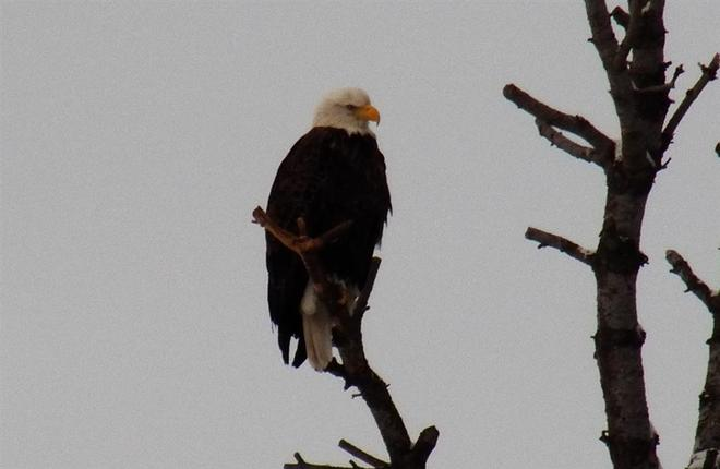 Eagle Elliot Lake, Ontario Canada